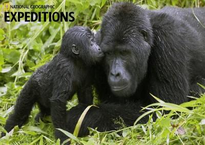 The Great Apes of Uganda & Rwanda