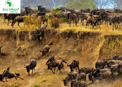 Tanzania Wildebeest Great Migration Safari