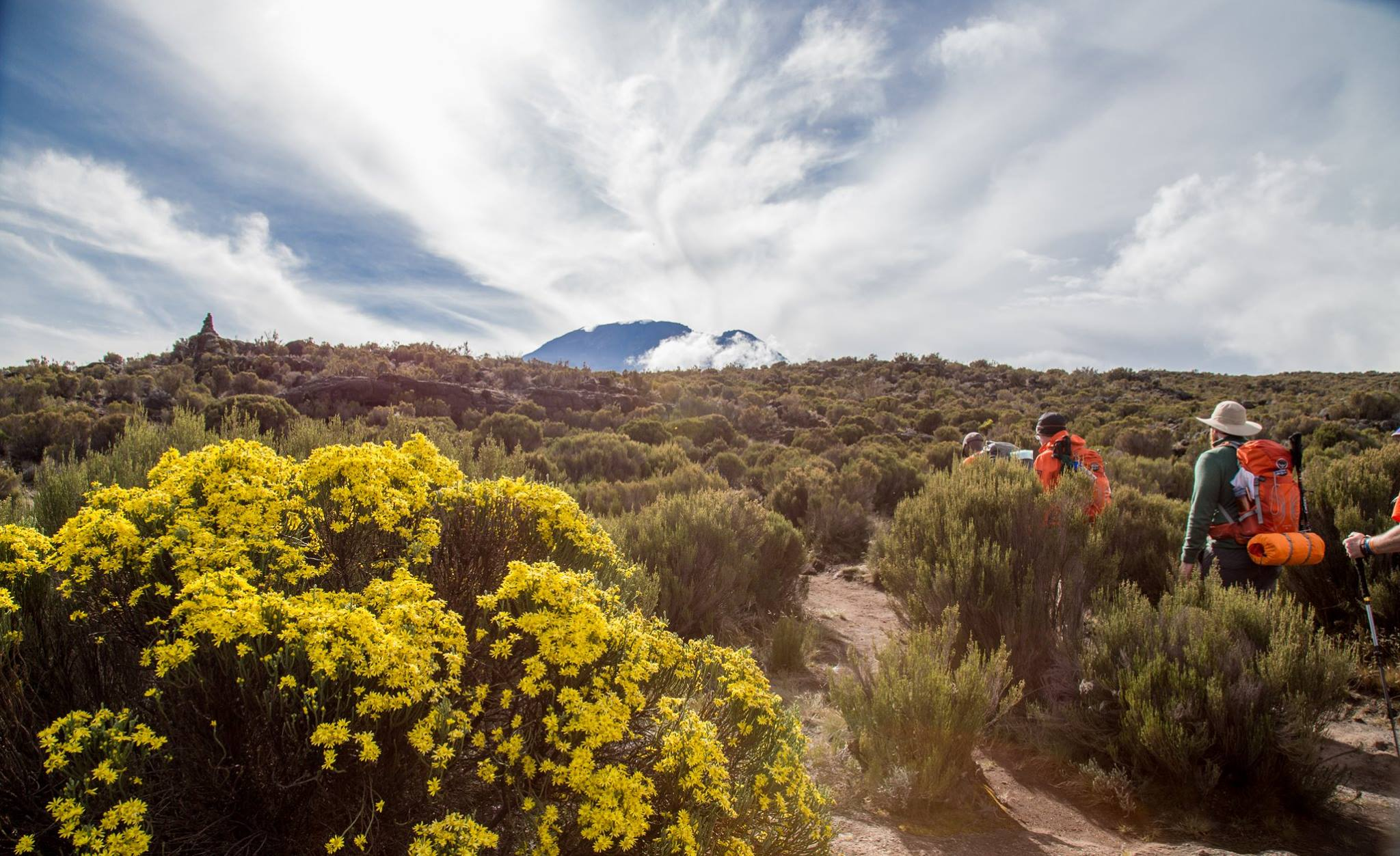 Flowers at Kilimanjaro National Park