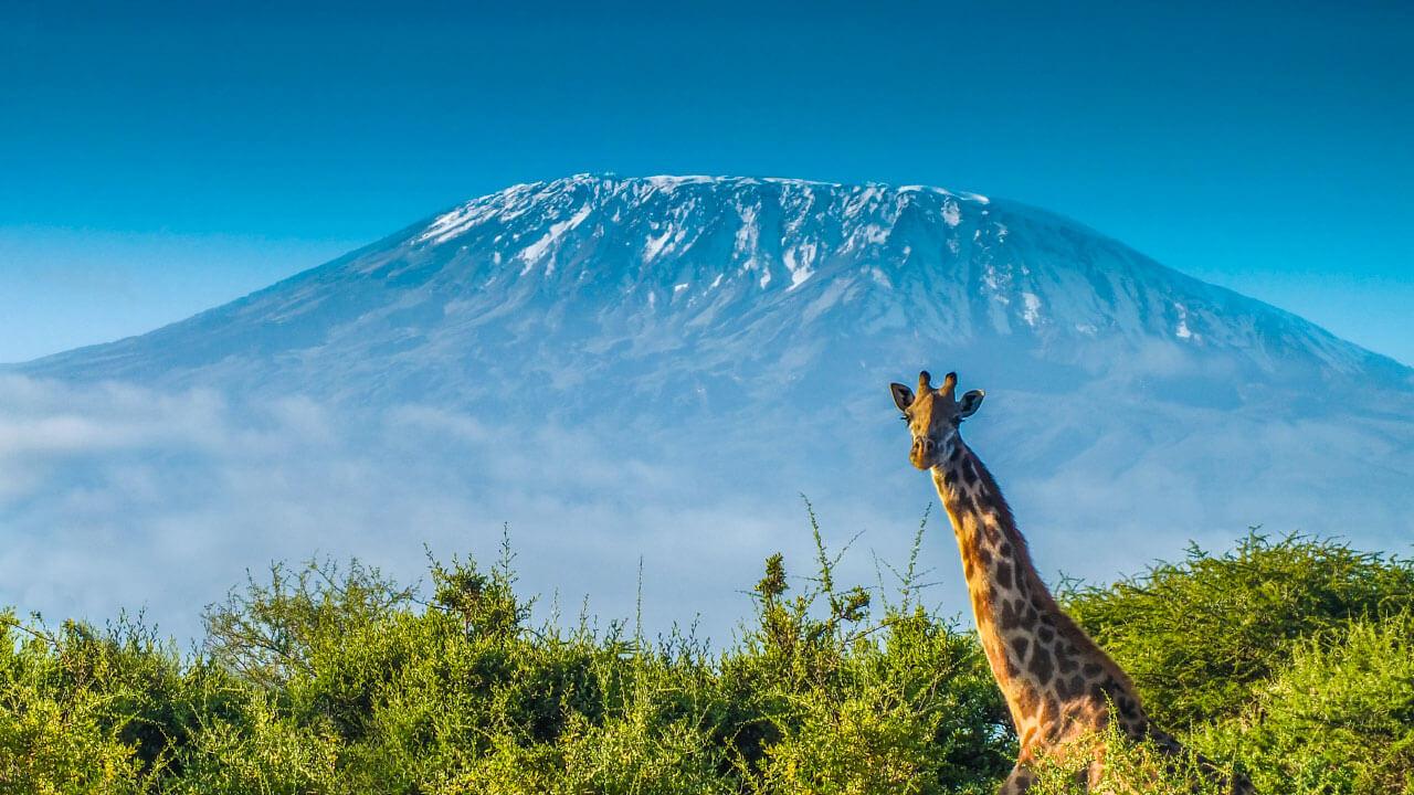 Tanzania safari & Trekking