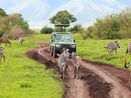10 Day Luxury Tanzanian Safari