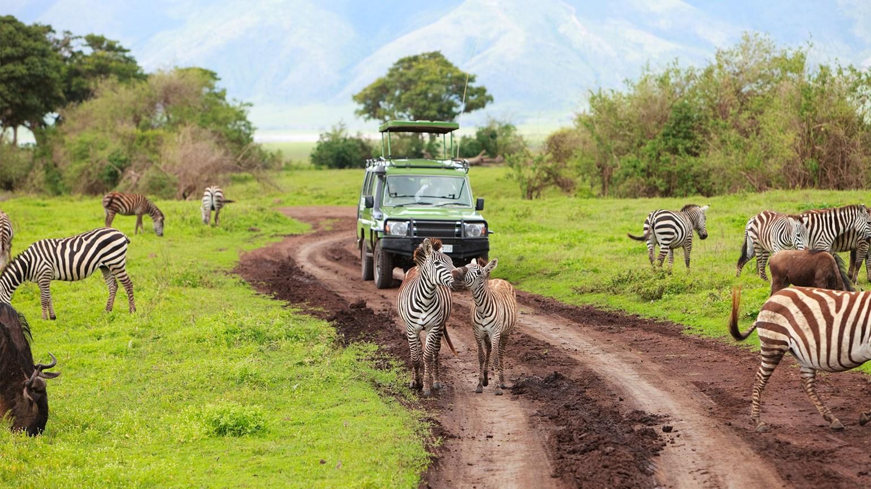 TanzaniaSafari jeep
