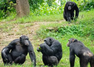 8 DAYS GORILLAS , CHIMPANZEES AND WILDLIFE UGANDA