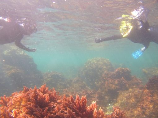5 Day Island & Ocean Biodiversity Experience on Faial Azores